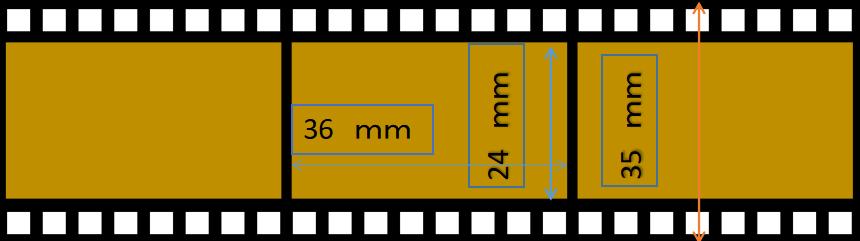 フィルムの幅が下の図にあるように35mm